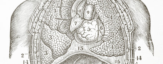 organ